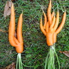 Cool Carrots