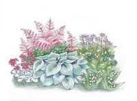 Image of Perennial Shade Garden Collection
