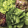 Image of Head Lettuce Collection