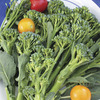 Image of Zamboni Rapini