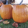 Image of Expert Pumpkin