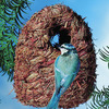 Image of Oval Roosting Nest Pocket