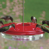 Image of Classic Hummingbird Feeder