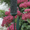 Image of Green Cattail Feeder