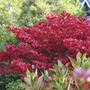 Image of Fire Ball Burning Bush