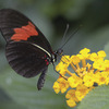 Image of Hello Yellow Butterfly Flower