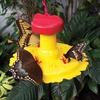 Image of Butterfly Feeder