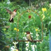 Image of Copper Hummingbird Swing